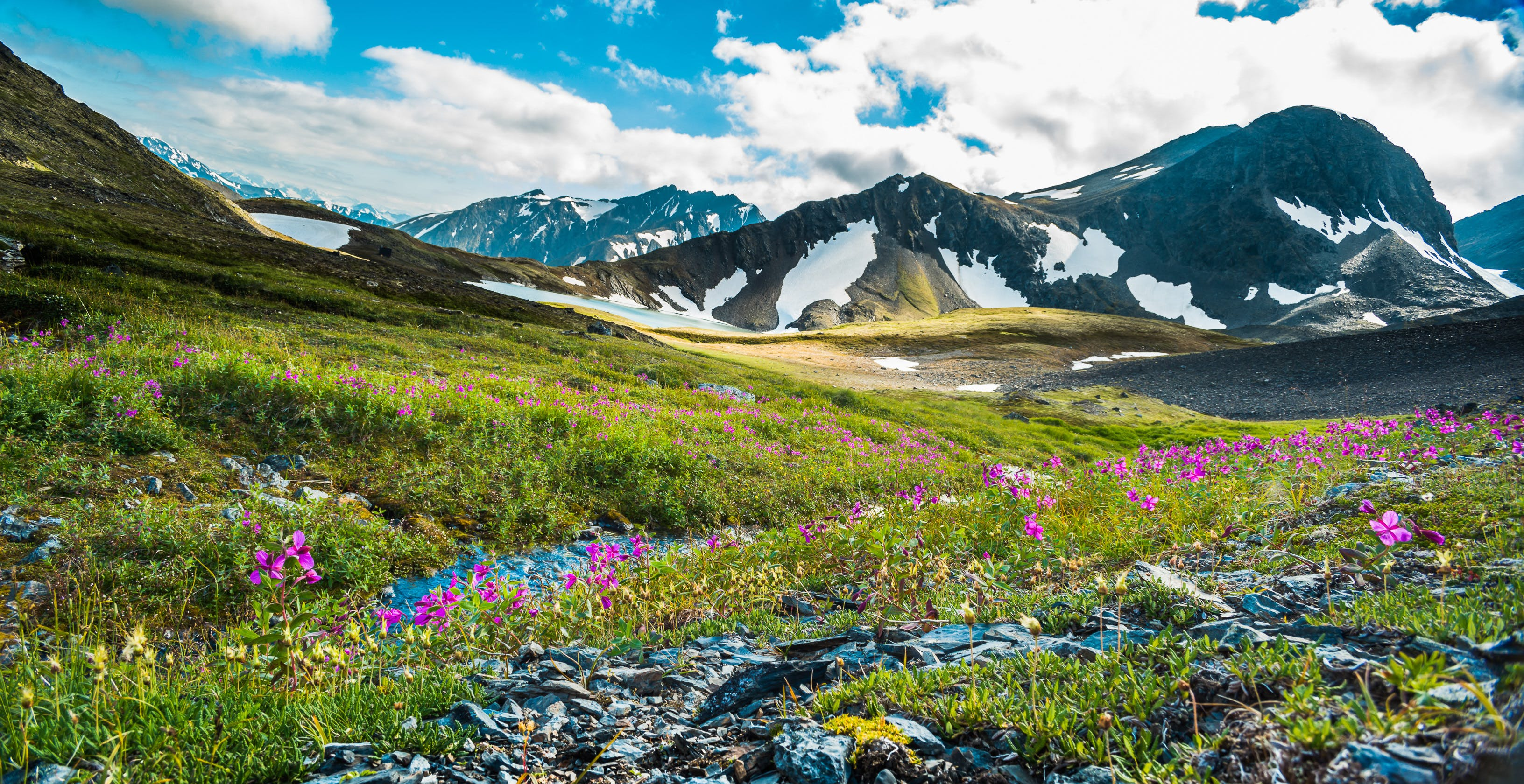 Alaska in full bloom.