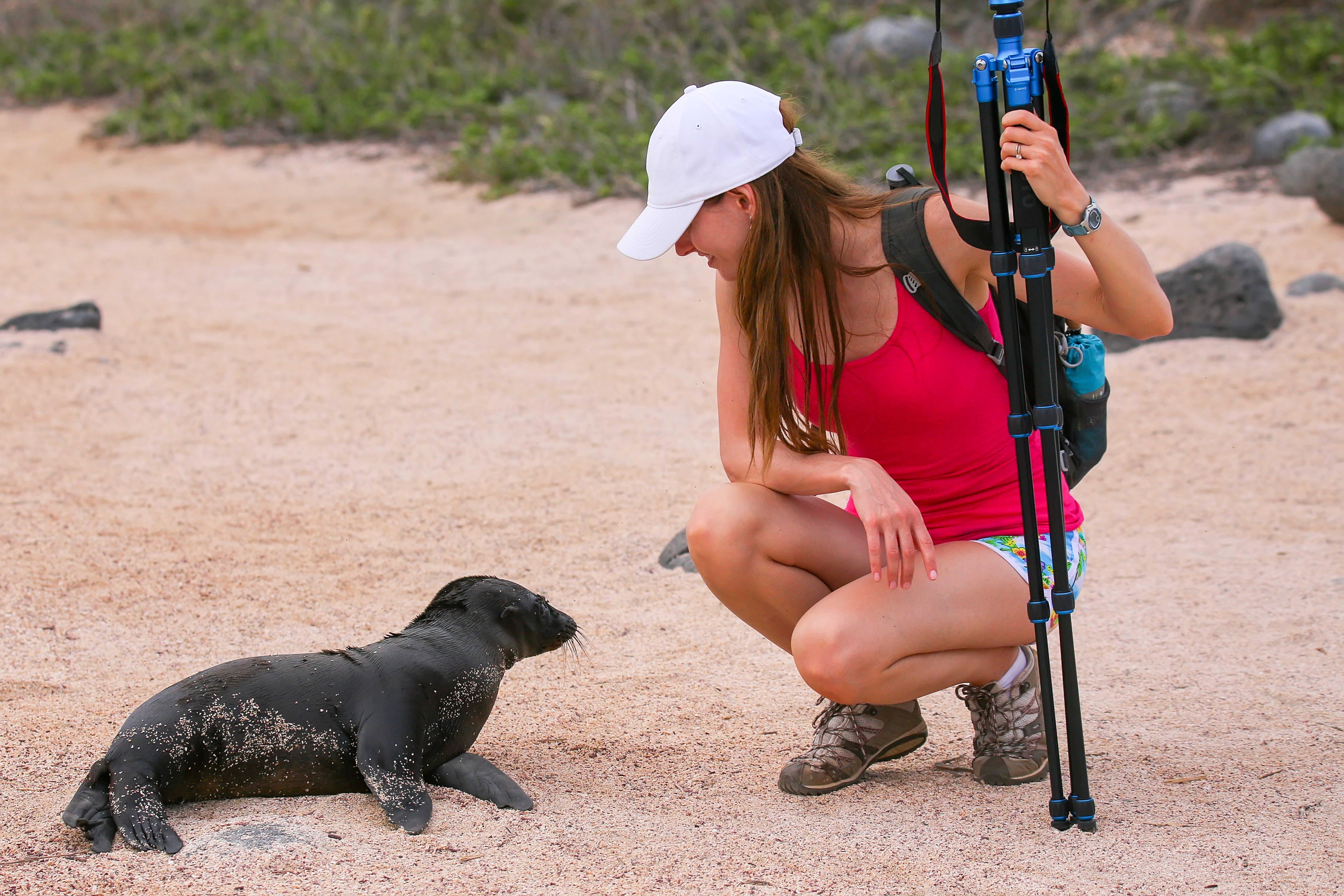 Expedition Sea lion Galapagos