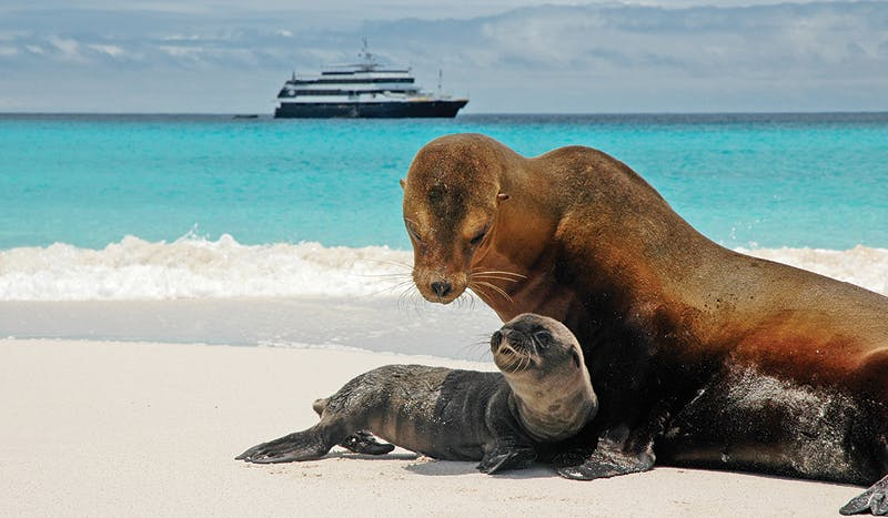 Sea lion and pup in front of Lindblad Expeditions Islander