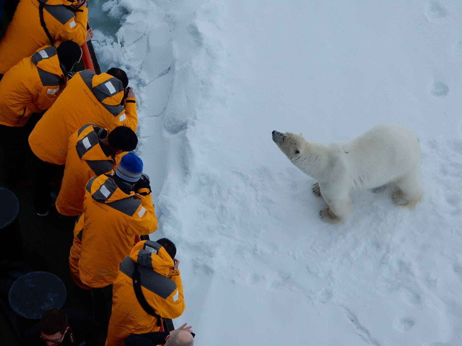 Polar bear next to Quark ship