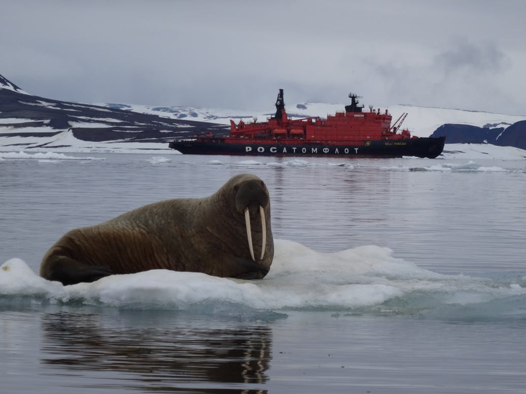 Walrus next to Quark expedition ship