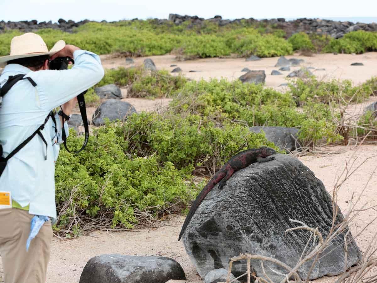 Man photographing iguana