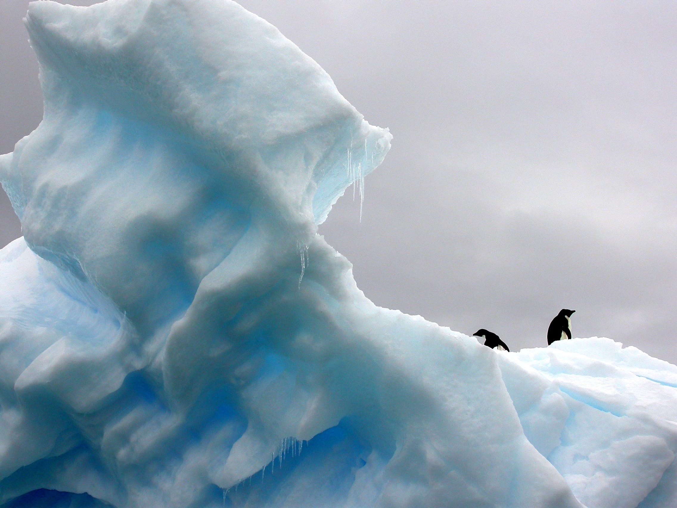 Six species of penguins can be found throughout Antarctica.