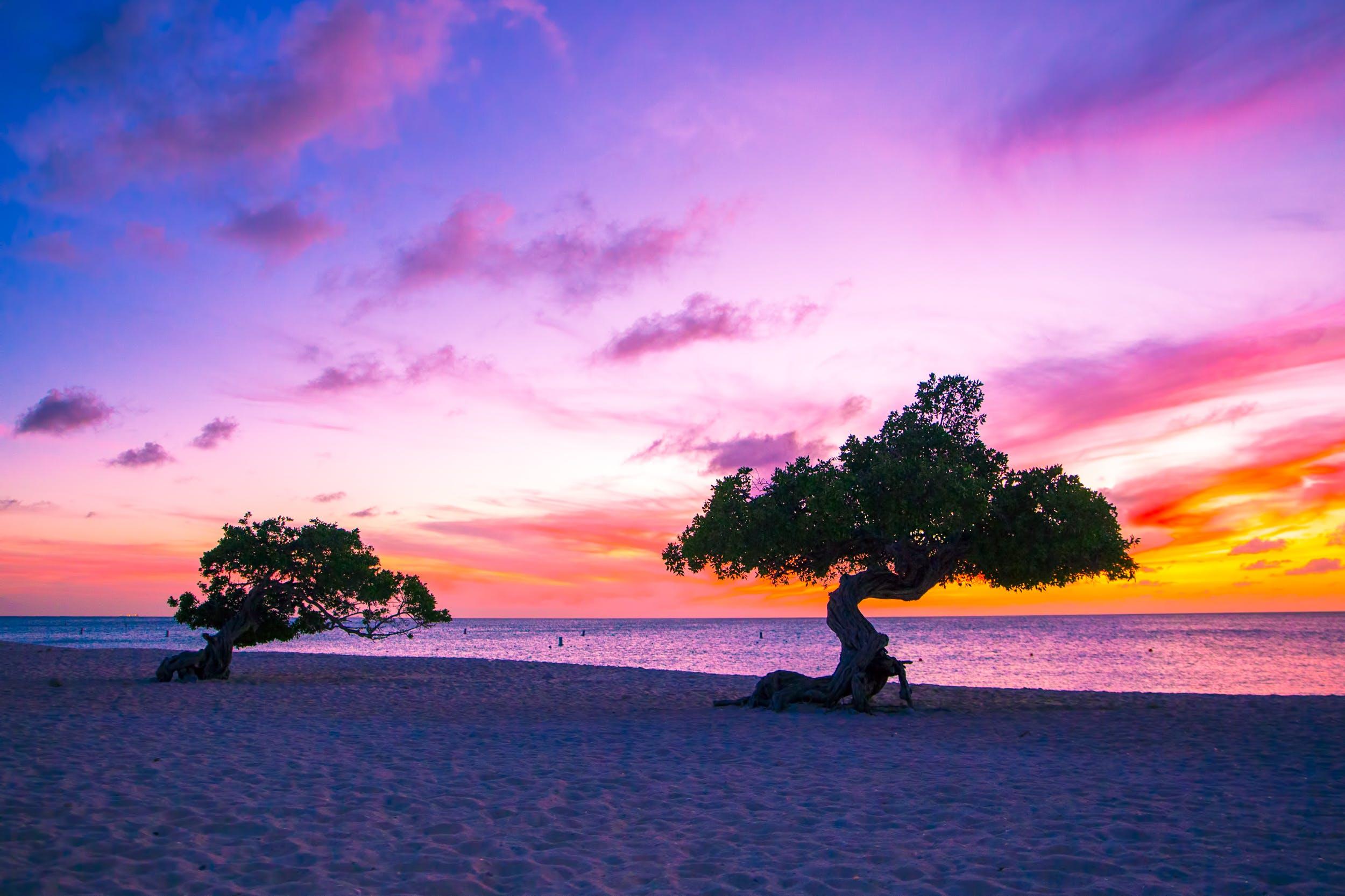 Divi Divi trees on Aruba Beach, Caribbean