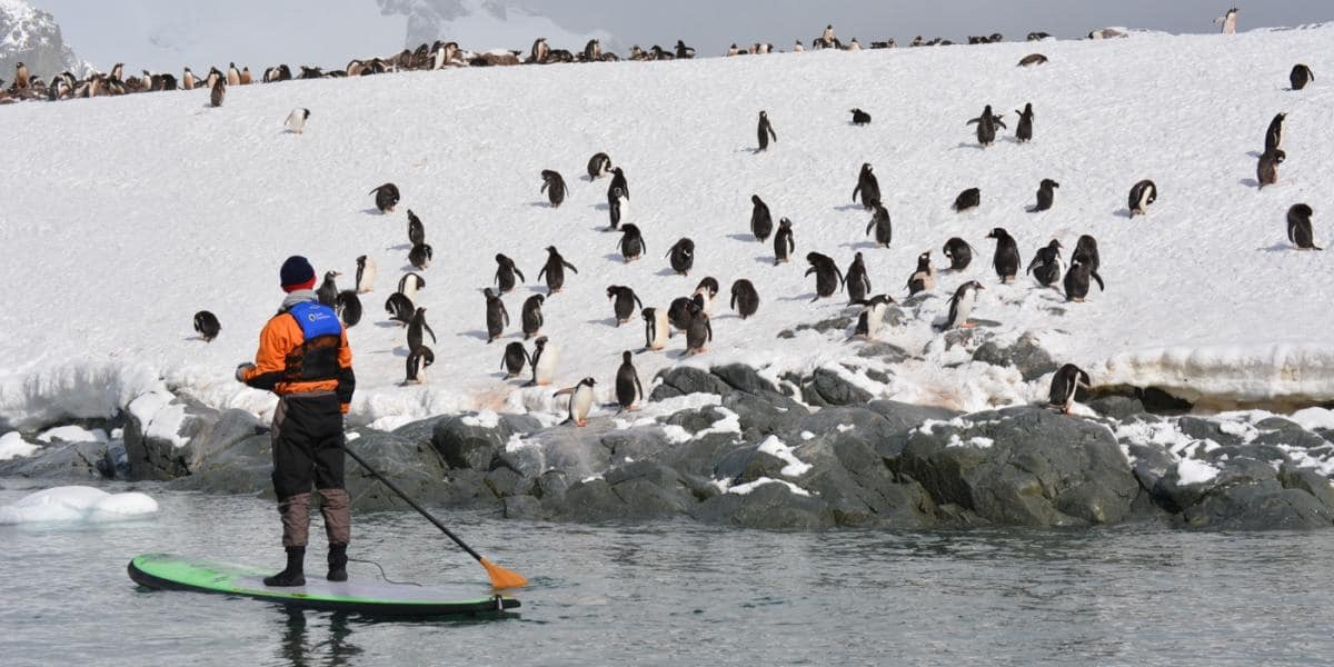 Interact with wildlife on a paddleboard.