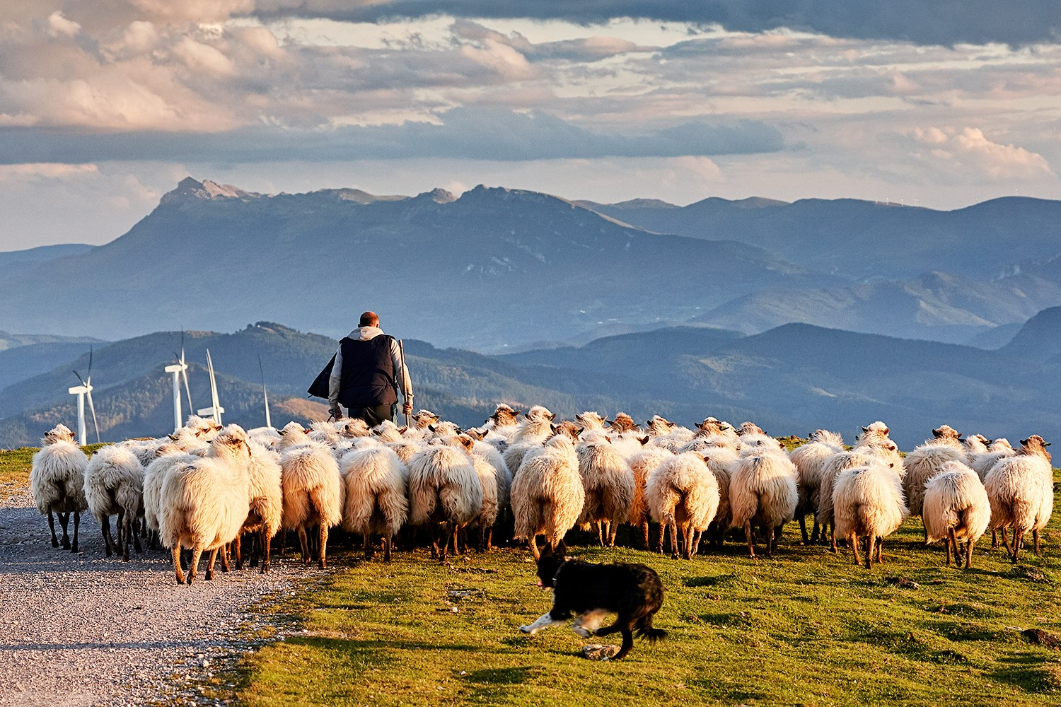 basque Spain shepherd