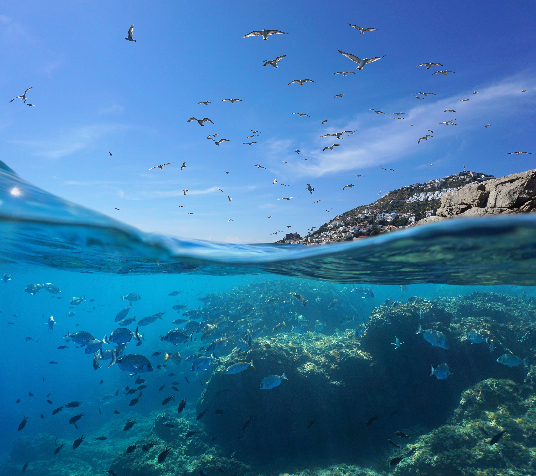 Marine life under the Mediterranean sea