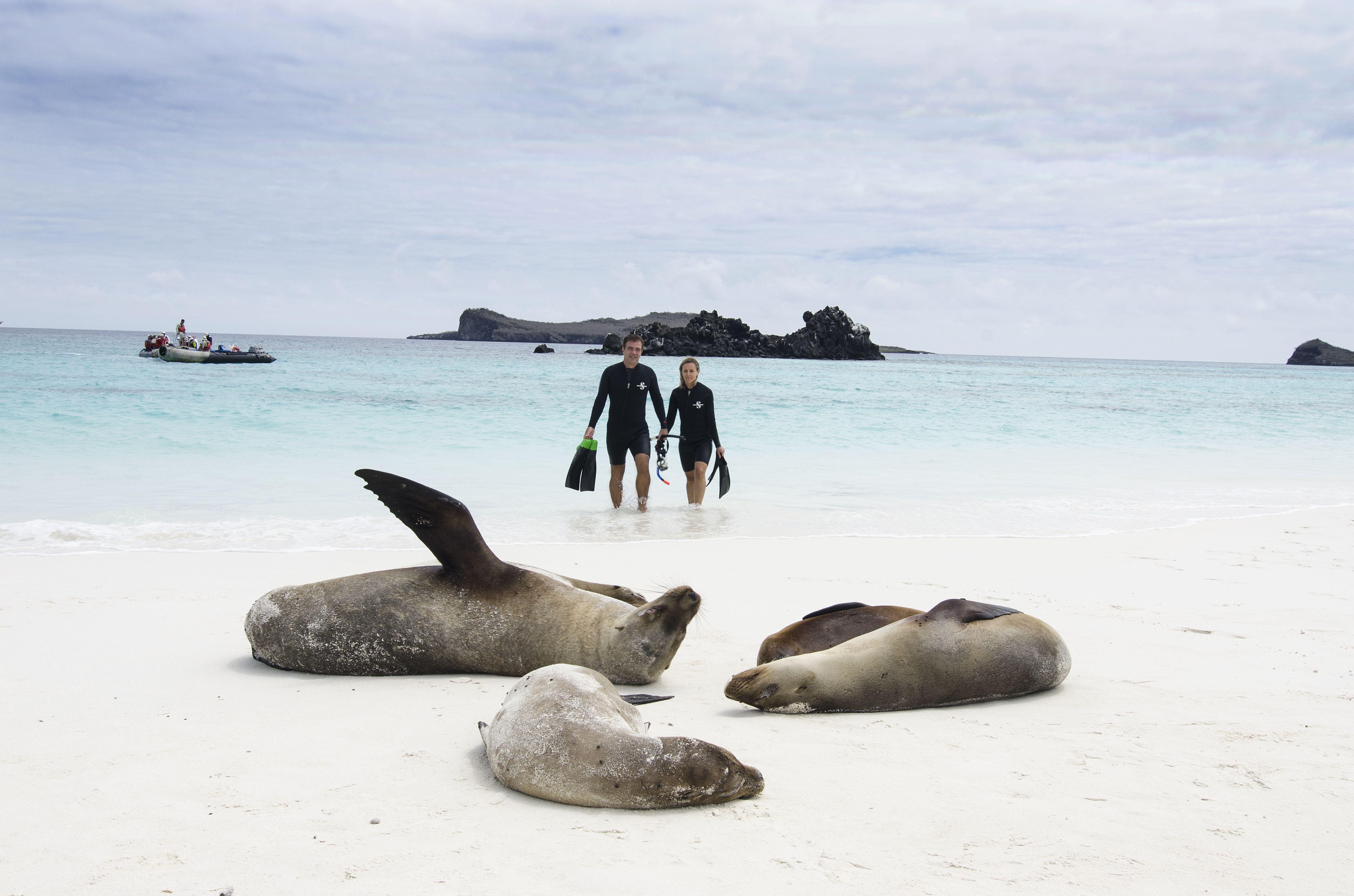 galapagos_snorkeling_sealions