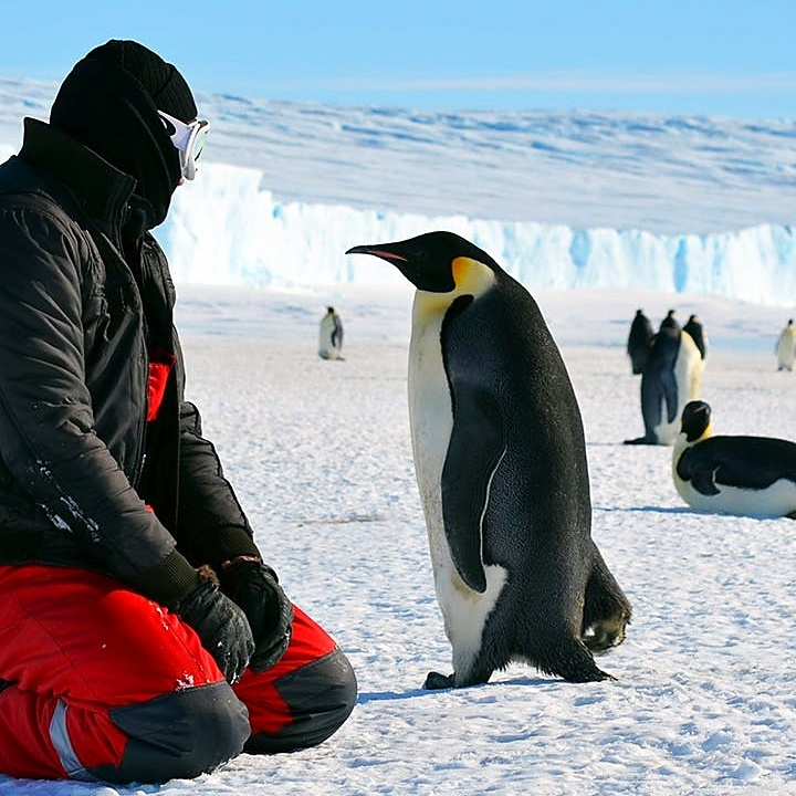 Penguin next to Lindblad guest